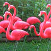 flamingos on lawn